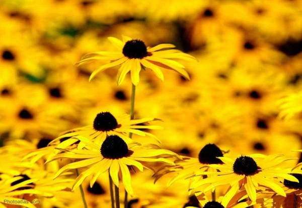 life-in-yellow-color- (9)