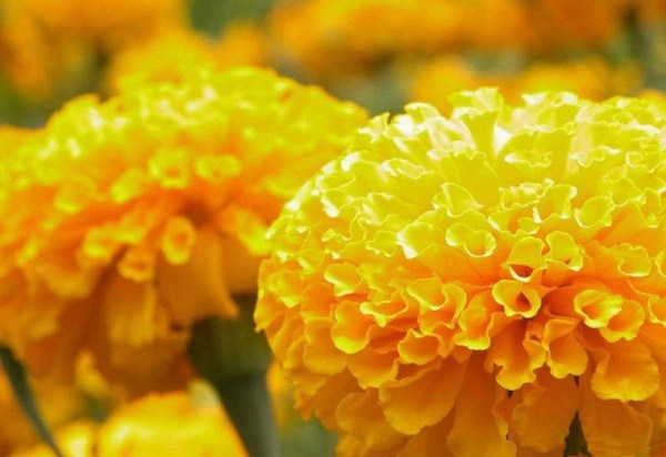 life-in-yellow-color- (11)