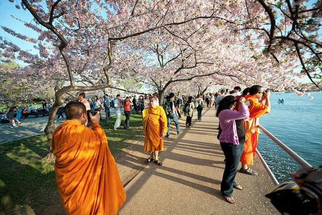 photos-of-cherry-blossom-festival-in-washington- (16)