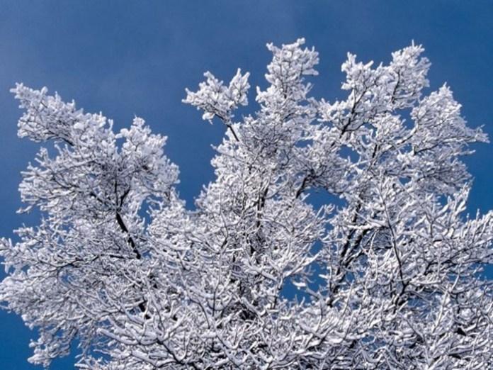 beautiful-winter-scenery- (3)