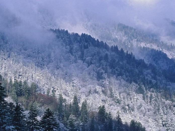 beautiful-winter-scenery- (5)