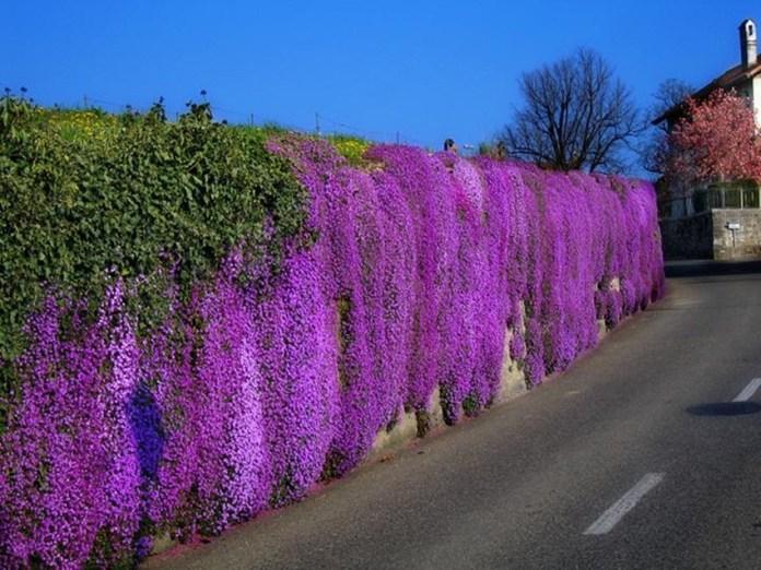 beauty-of-switzerland-33-photos- (31)