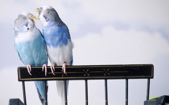 colorful-parrots-26-photos- (1)