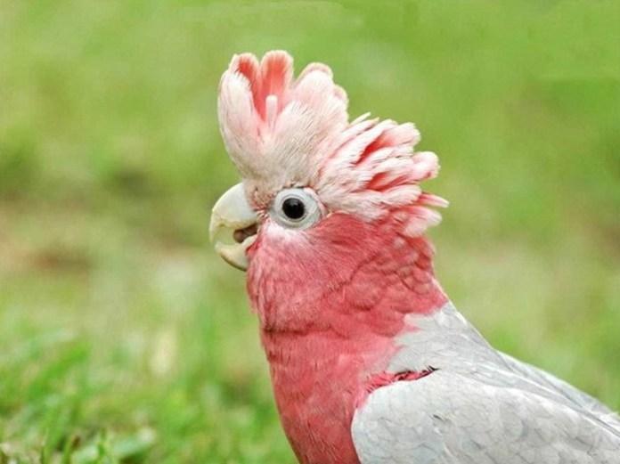 colorful-parrots-26-photos- (4)