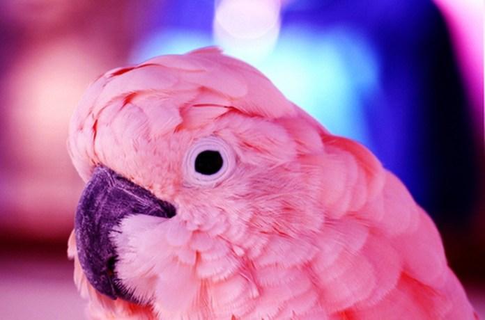 colorful-parrots-26-photos- (9)