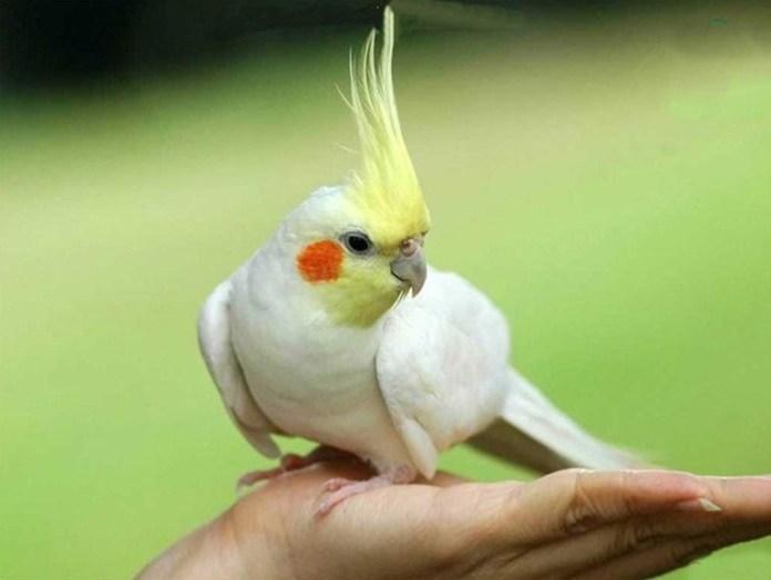 colorful-parrots-26-photos- (13)