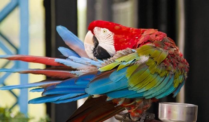 colorful-parrots-26-photos- (22)