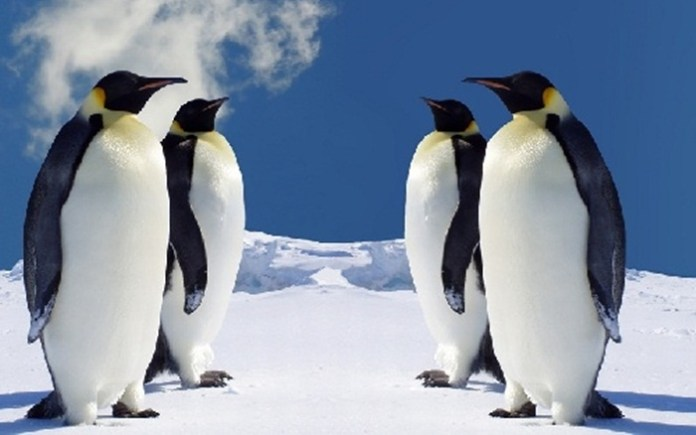 cute-penguin-photos- (6)