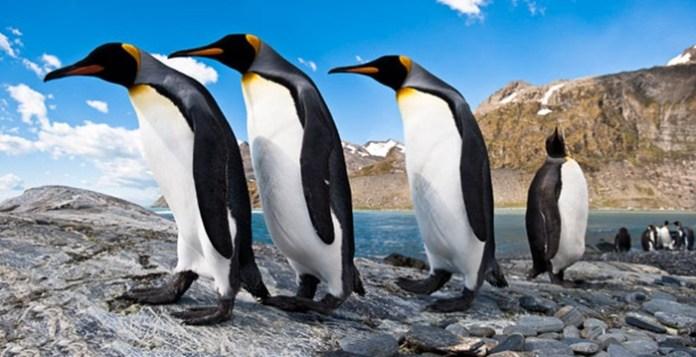 cute-penguin-photos- (11)
