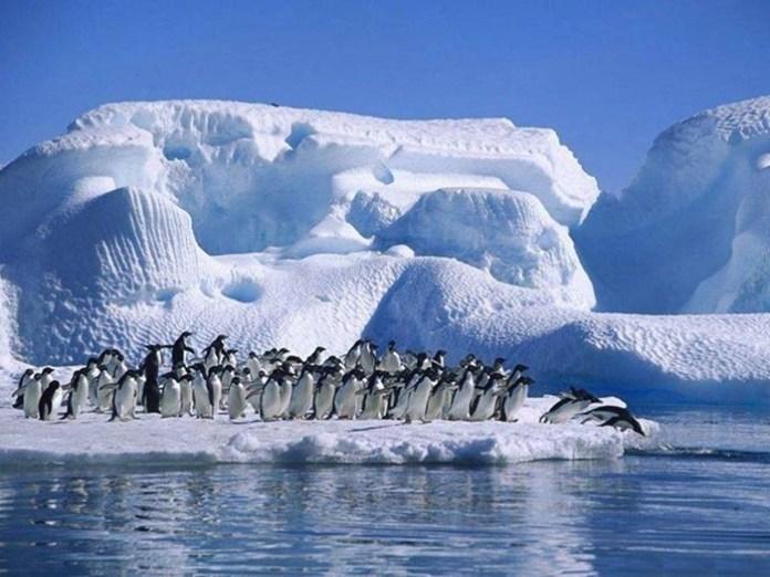 cute-penguin-photos- (15)
