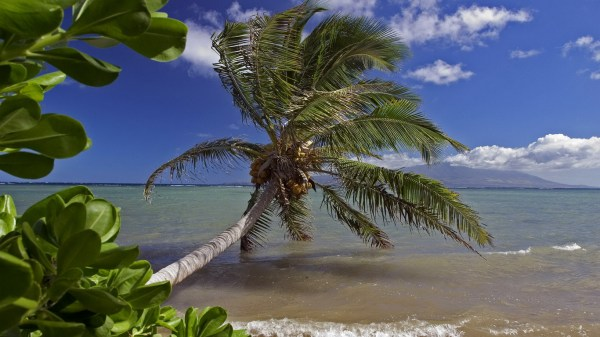 tropical-beach-wallpapers- (2)