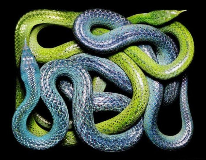 colorful-snakes-16-photos- (1)