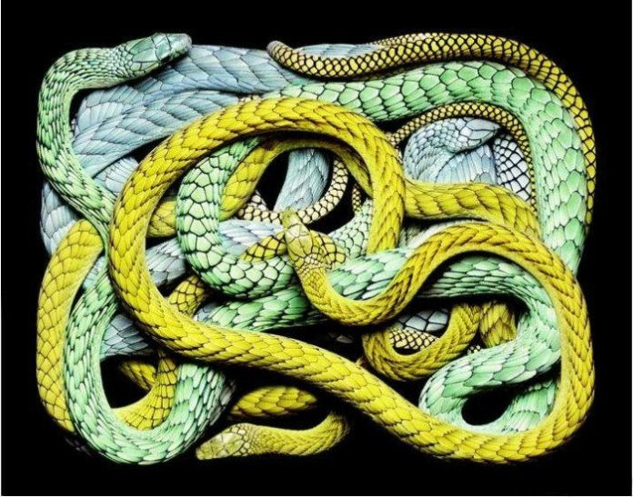 colorful-snakes-16-photos- (4)