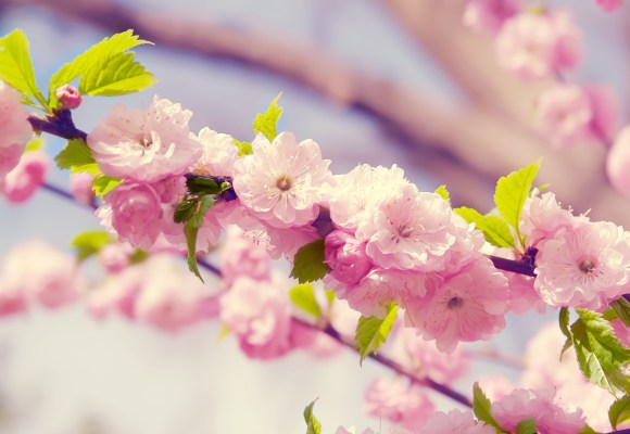 colorful-spring-wallpapers- (6)