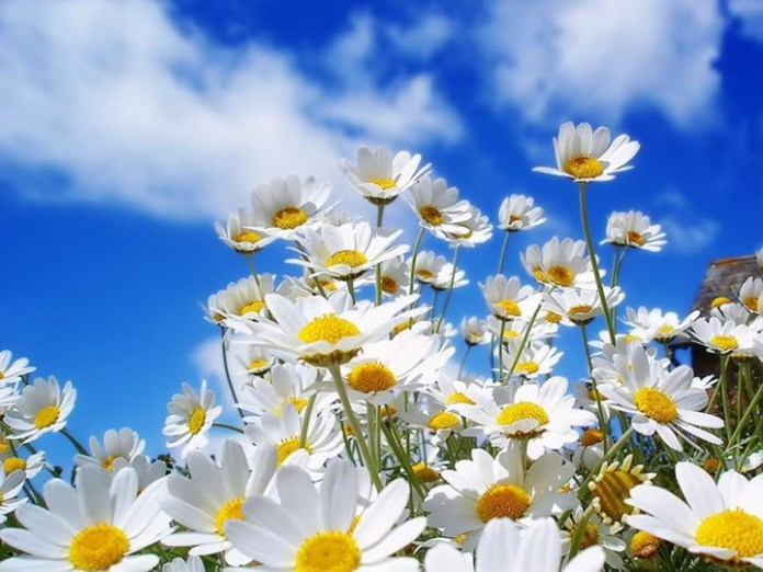 flower-with-sky- (2)
