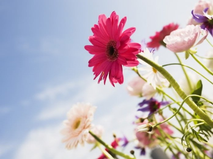flower-with-sky- (8)