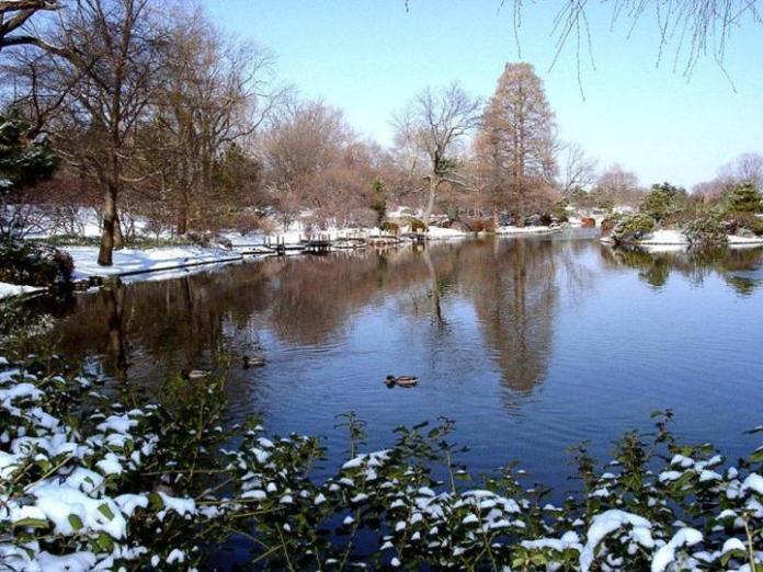 snow-in-autumn- (10)