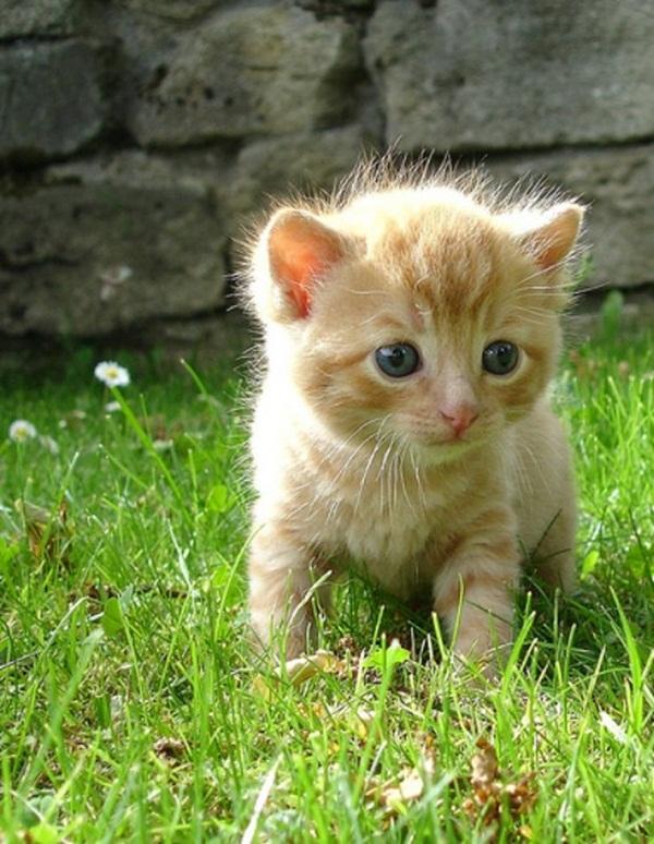 adorable-baby-animals- (12)