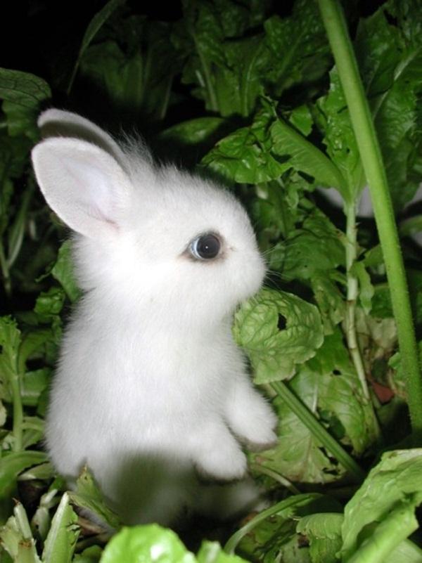 adorable-baby-animals- (22)