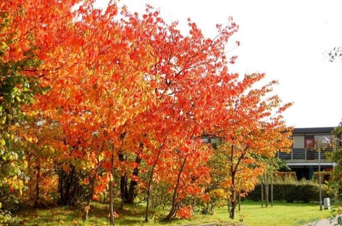 beauty-of-autumn- (4)