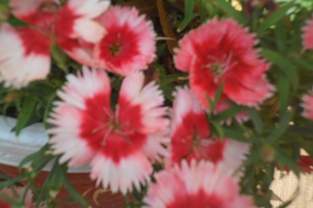 colorful-spring-flowers- (5)