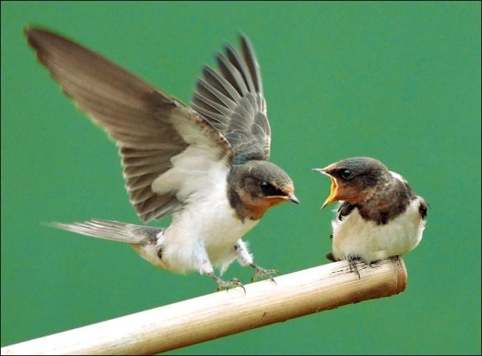 cute-baby-birds- (6)