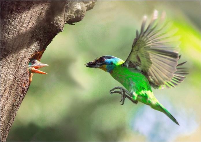 cute-baby-birds- (7)