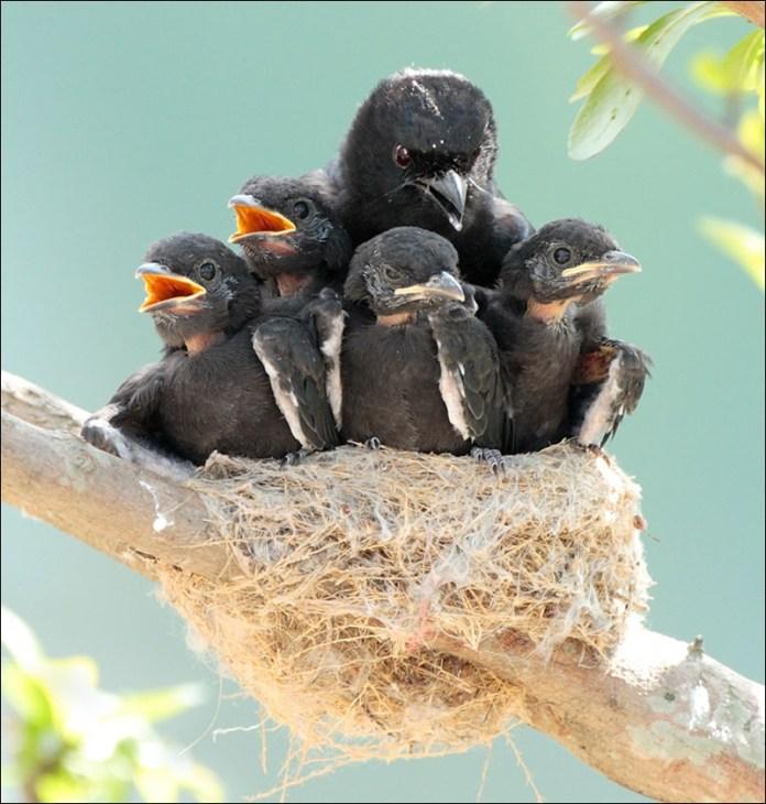 cute-baby-birds- (8)