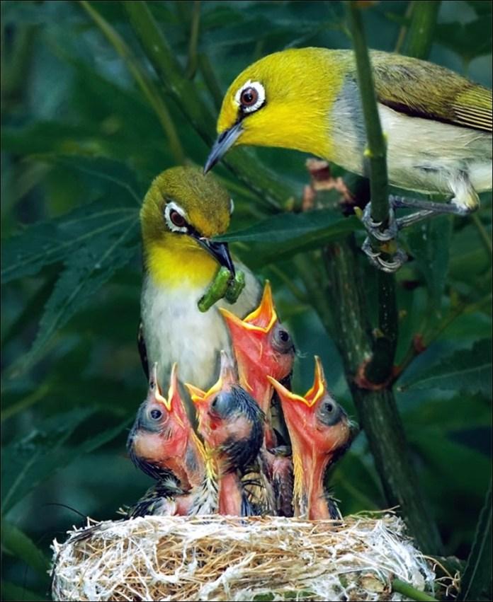 cute-baby-birds- (23)
