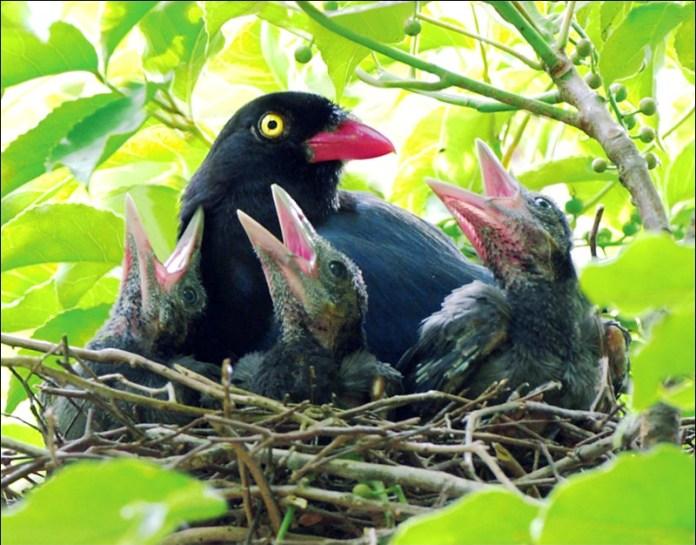 cute-baby-birds- (24)