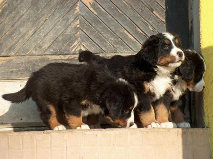 cute-dogs-photos- (10)