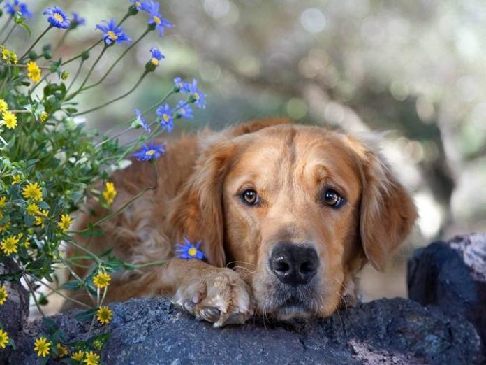 cute-dogs-photos- (13)