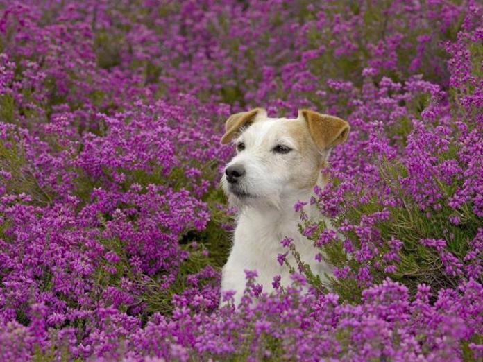 cute-dogs-photos- (16)