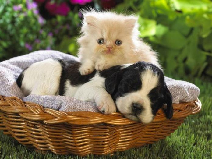 cute-dogs-photos- (21)