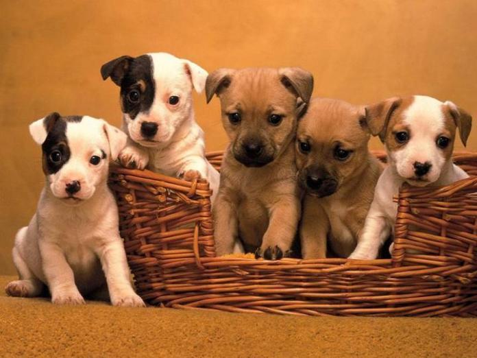 cute-dogs-photos- (22)