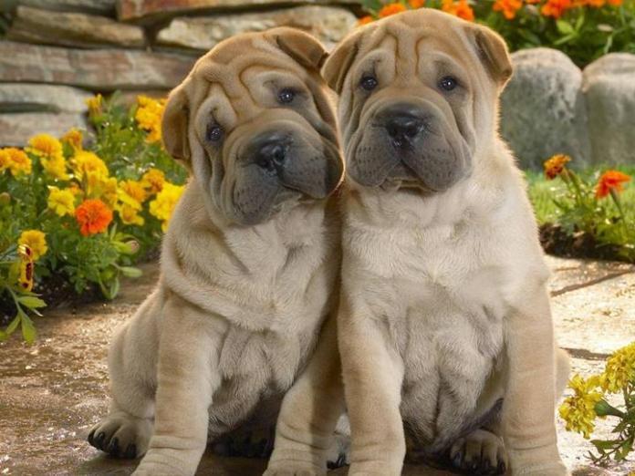 cute-dogs-photos- (24)