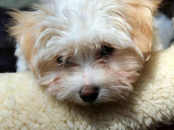 cute-dogs-photos- (29)