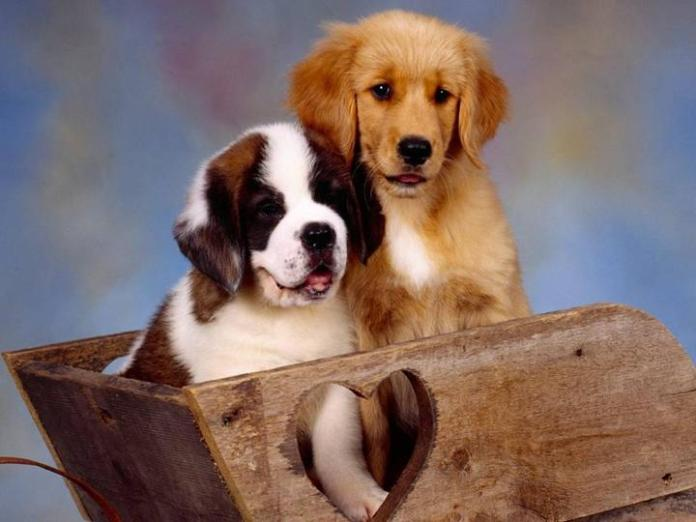 cute-dogs-photos- (3)