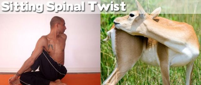 yoga-and-animals- (15)