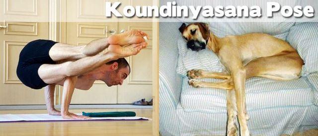 yoga-and-animals- (17)