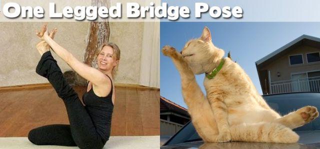 yoga-and-animals- (2)