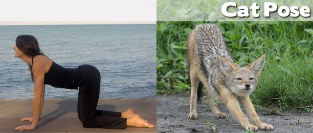 yoga-and-animals- (20)