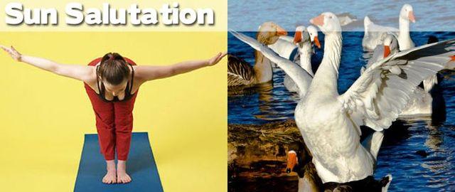 yoga-and-animals- (26)