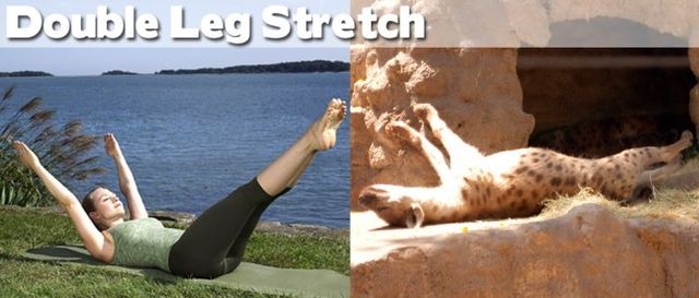 yoga-and-animals- (4)