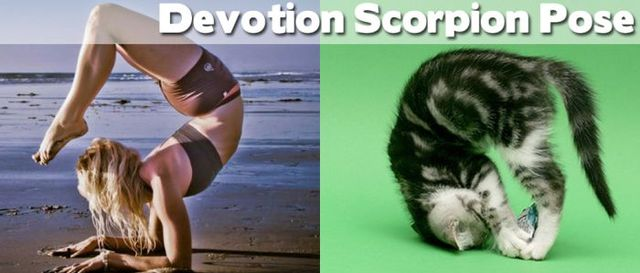 yoga-and-animals- (8)