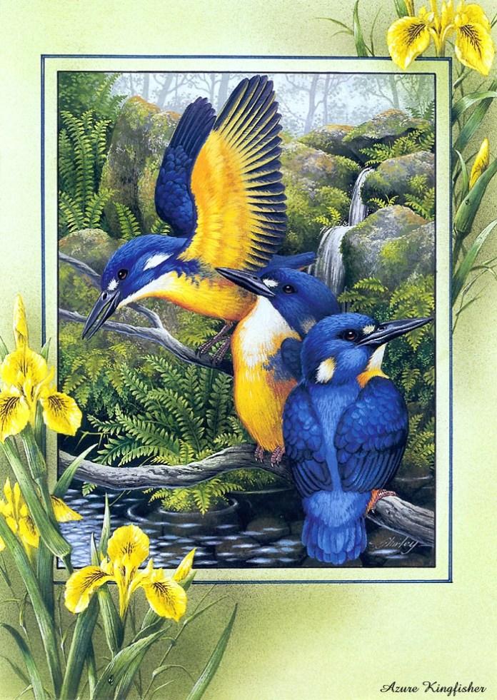 beautiful-birds-paintings- (2)