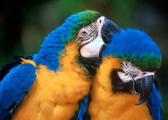 lovely-birds-couple-30-photos- (3)