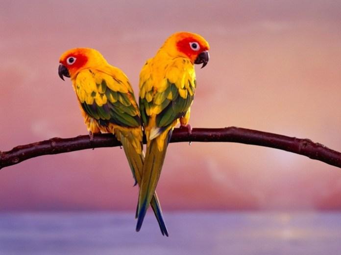 lovely-birds-couple-30-photos- (24)