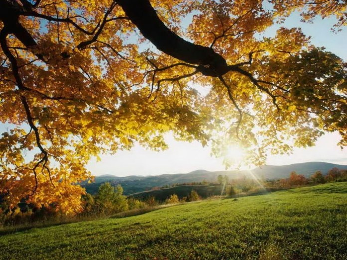 awesome-sunshine-photos- (11)
