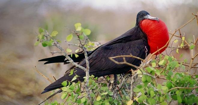 beautiful-birds-in-action- (3)